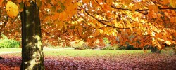 Fall-Fun-lovely-autumn-31000